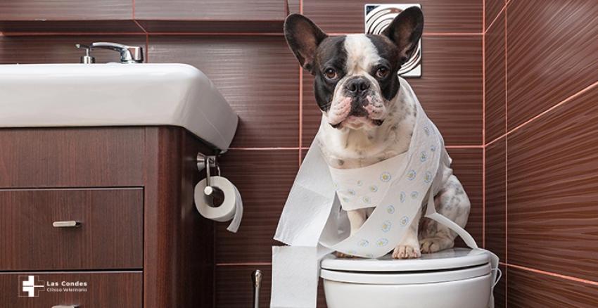 ¿Te sigue siempre tu perro al baño? ...Esto es lo que intenta decirte