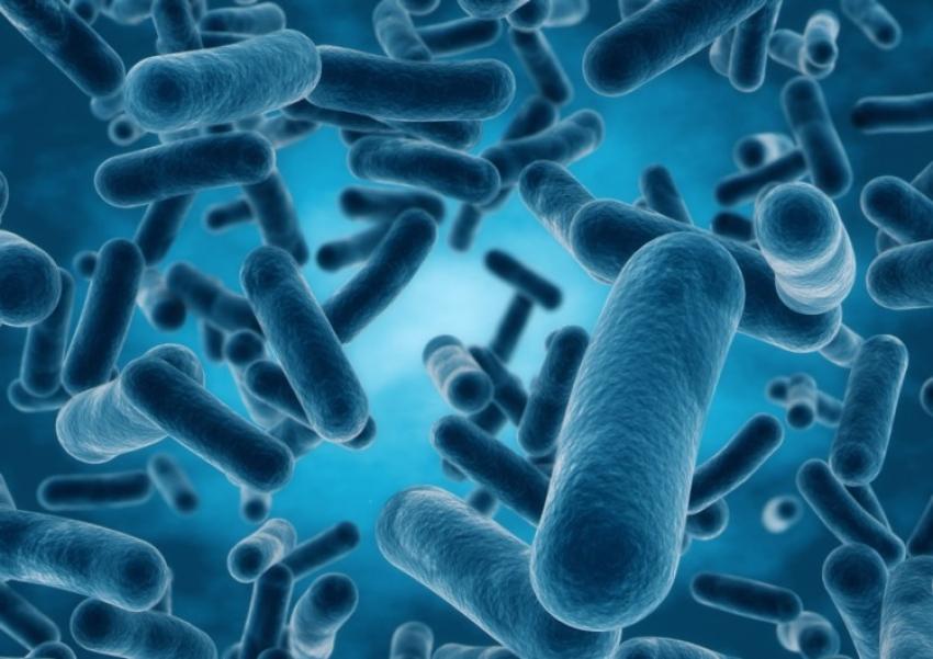 Claves para elegir sus mejores probióticos